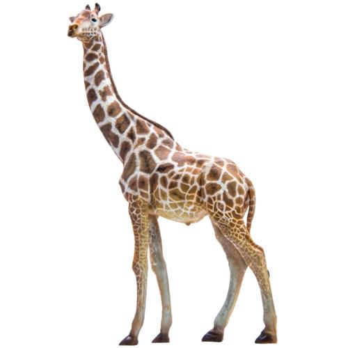 PNSO Bumba the Giraffe