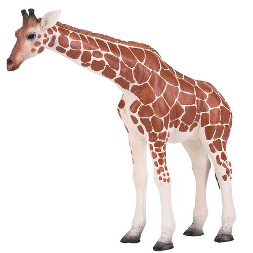 Mojo Giraffe Female