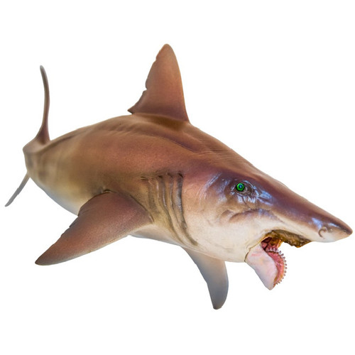 PNSO Haylee the Helicoprion