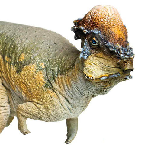PNSO Austin the Pachycephalosaurus
