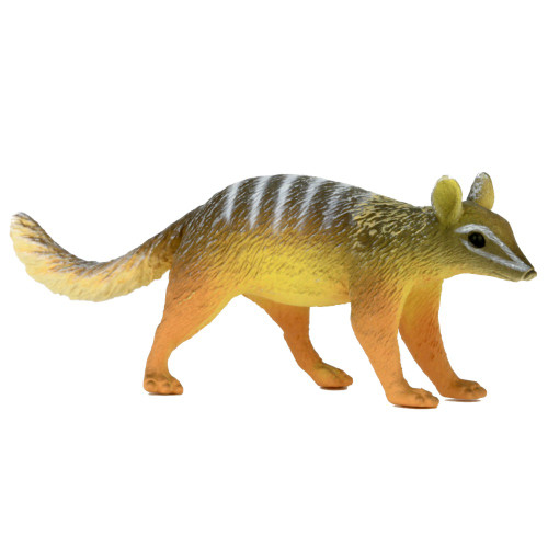 Science and Nature Small Numbat