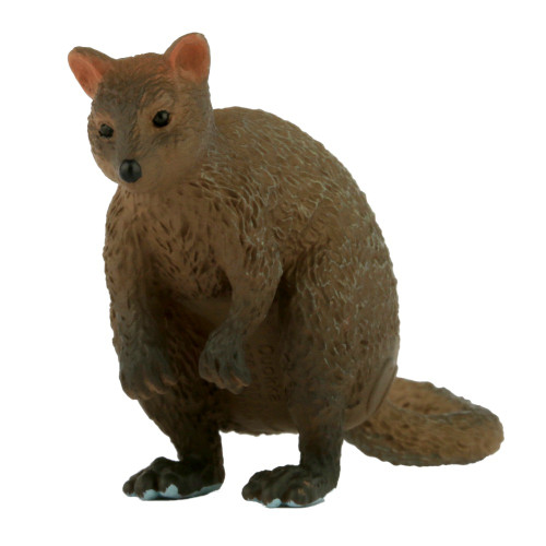 Science and Nature Small Quokka