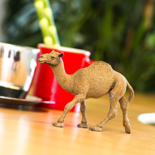Safari Ltd Dromedary Camel