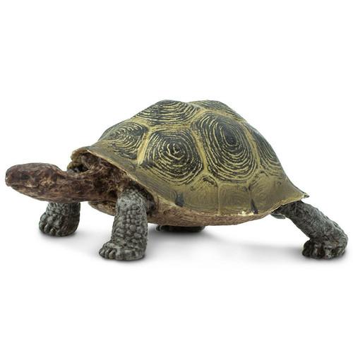 Safari Ltd Desert Tortoise