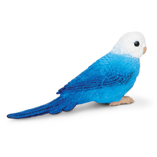 Budgie Blue Safari
