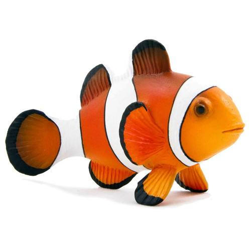 Mojo Clown Fish