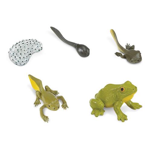 Safari Ltd Life Cycle of a Frog