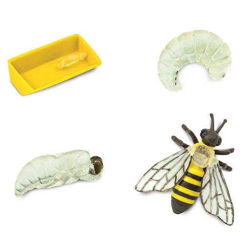 Safari Ltd Life Cycle of a Honey Bee