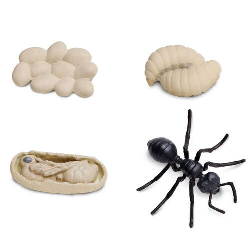 Safari Ltd Life Cycle of an Ant