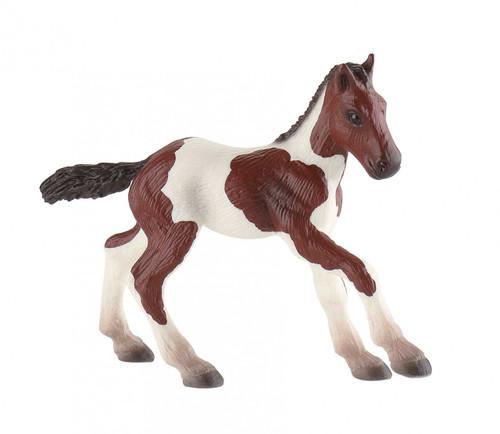 Paint Horse Foal