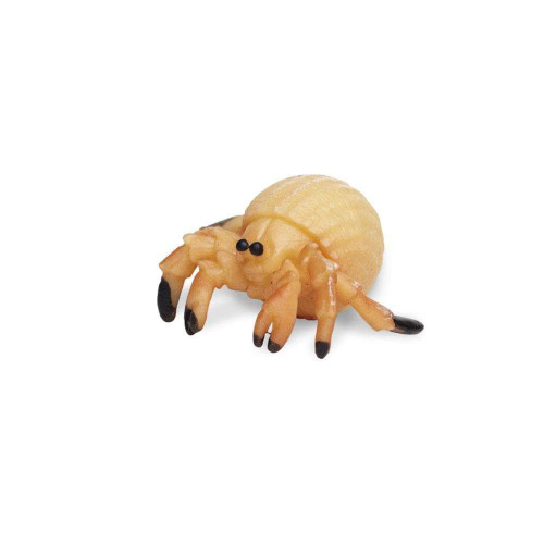 Safari Ltd Mini Hermit Crabs