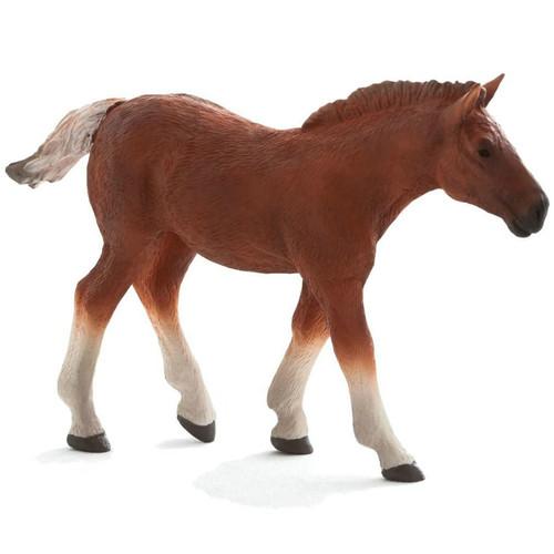 Suffolk Punch Foal