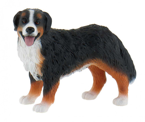Bernese Mountain Dog Bianca 2014