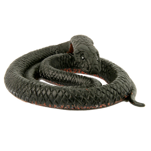 Science and Nature Red Bellied Black Snake