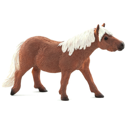 Mojo Shetland Pony