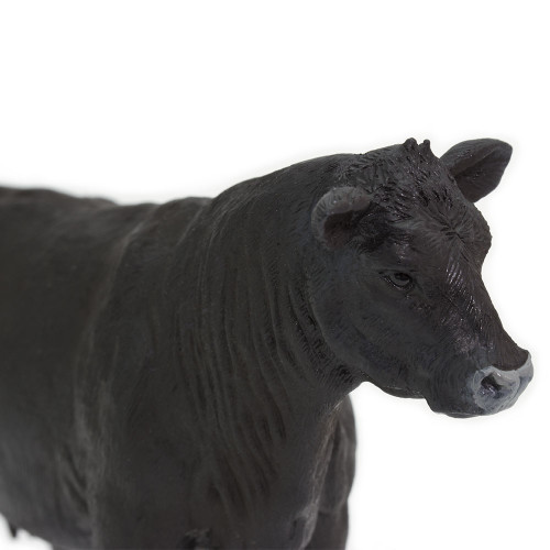 Black Angus Cow Safari