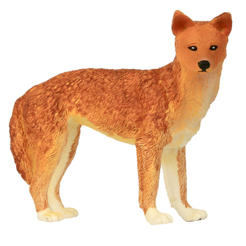 Science and Nature Large Dingo