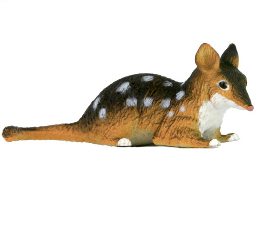Science and Nature Small Quoll