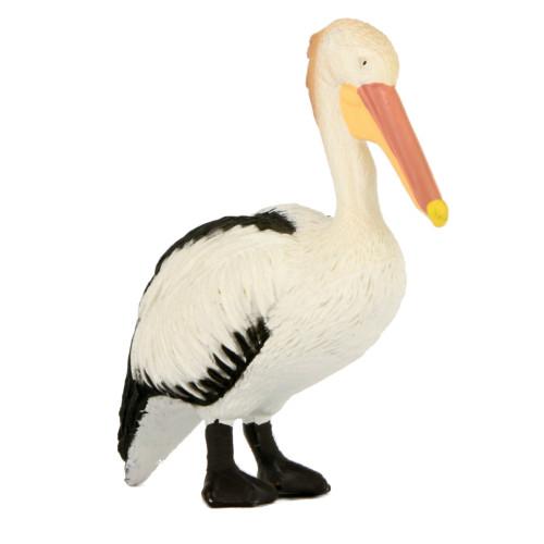 Small Pelican