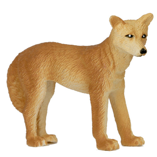 Science and Nature Small Dingo