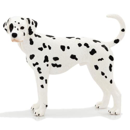 Mojo Dalmatian Male