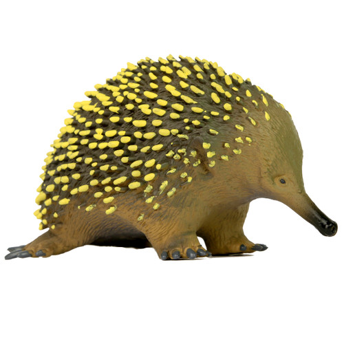 Science and Nature Large Echidna