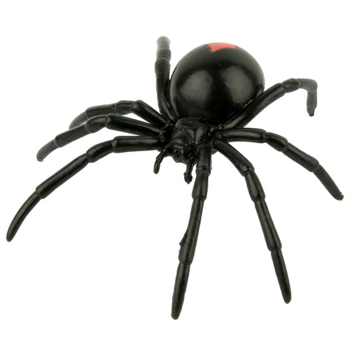 Science and Nature Redback Spider