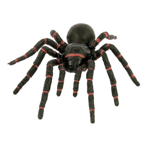 Science and Nature Funnel Web Spider