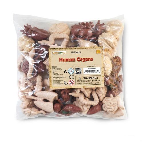 Safari Ltd Human Organs Bulk Bag 48pc