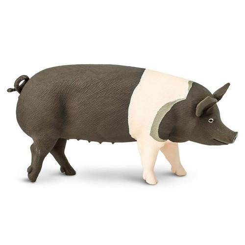 Safari Ltd Hampshire Pig