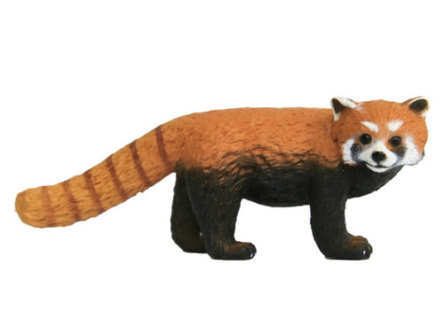 Science and Nature Red Panda