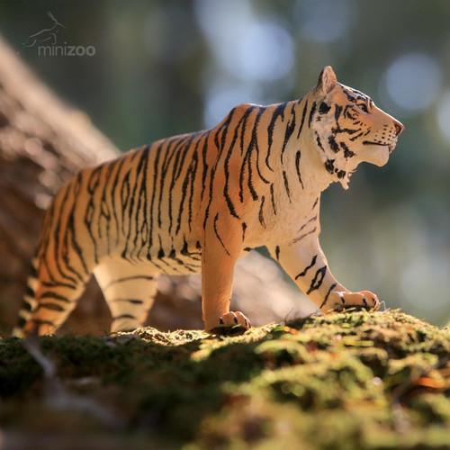 CollectA Tiger Siberian