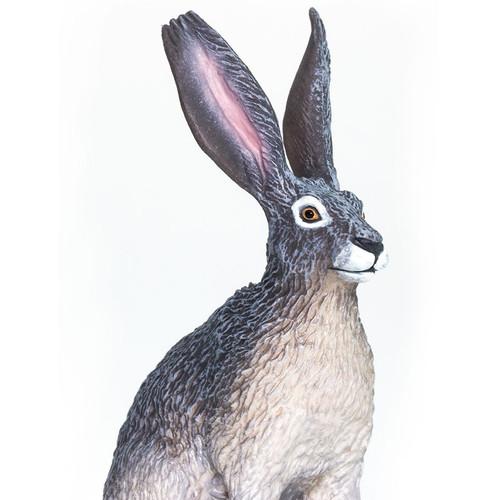 American Desert Hare