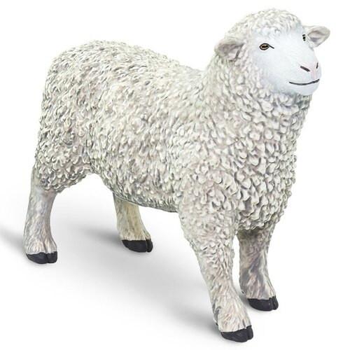 Safari Ltd Sheep