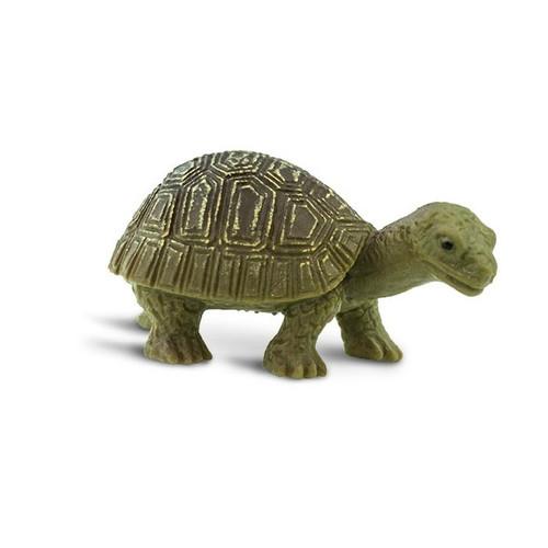 Safari Ltd Mini Tortoises