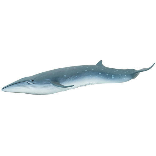 Safari Ltd Sei Whale