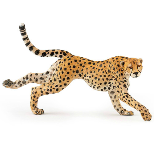 Papo Cheetah, Running
