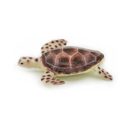 Science and Nature Green Turtle