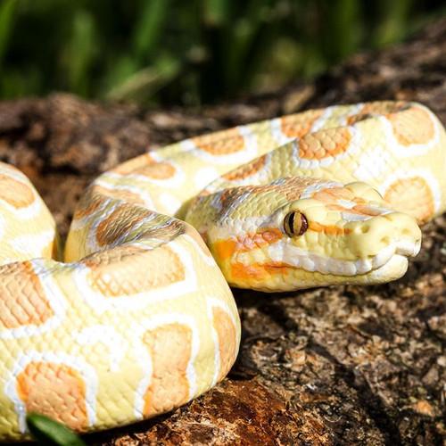 Safari Ltd Albino Burmese Python IC