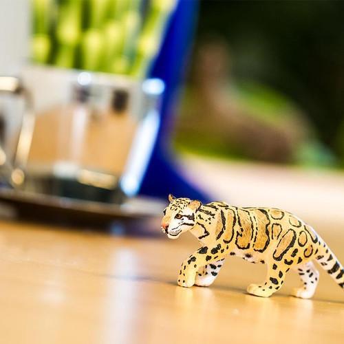 Clouded Leopard Safari