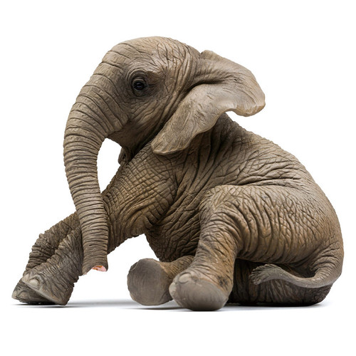 PNSO Manman the African Elephant calf sitting