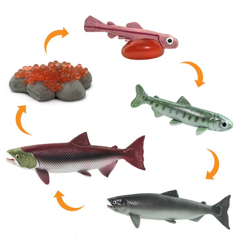 Safari Ltd Life Cycle Of A Salmon