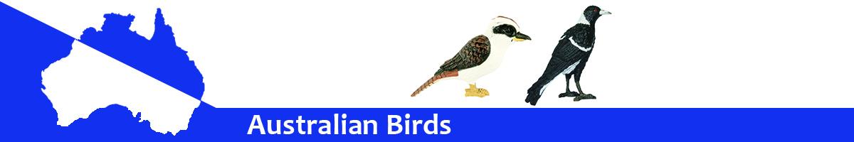Australian Birds banner