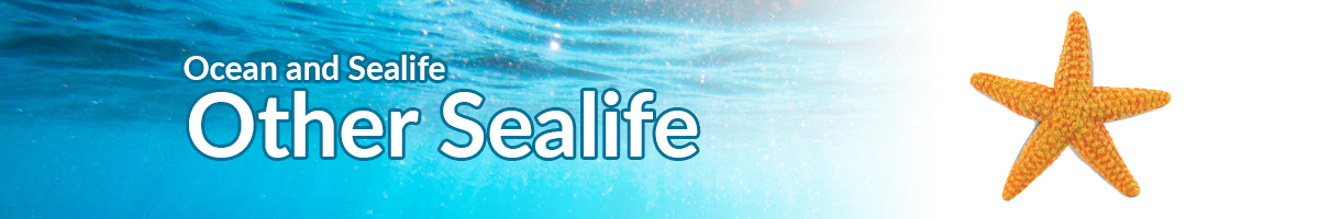 Ocean and Sealife other sealife banner - Click here to go back to Ocean and Sealife