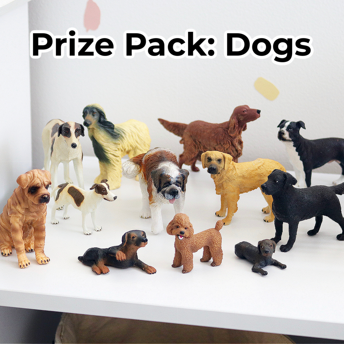 prize-pack-dogs.jpeg