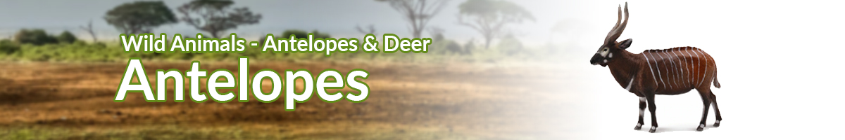Wild Animals Antelopes banner - Click here to go back to Wild Animals