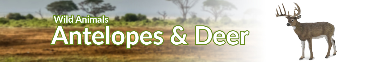 Wild Animals Antelopes & Deer banner - Click here to go back to Wild Animals