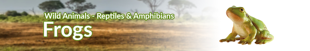 Wild Animals Frogs banner - Click here to go back to Wild Animals