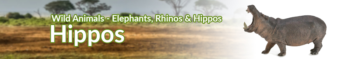 Wild Animals Hippos banner - Click here to go back to Wild Animals
