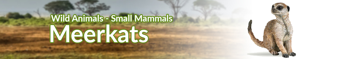 Wild Animals Meerkats banner - Click here to go back to Wild Animals
